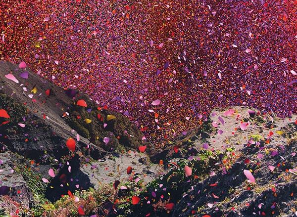 小镇成为花的海洋 800万花瓣雨美到极致